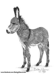 Baby Donkey Val 3 FB