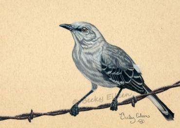 Mockinbird 2 CR FB