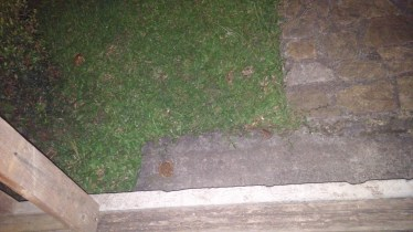 The toads on my front walk